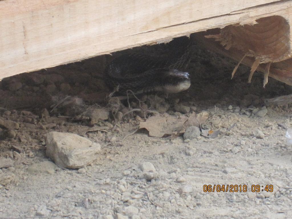 Day 1 snake pic 2